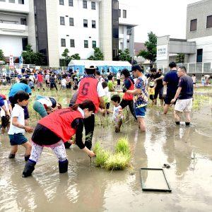 20170611田んぼアート田植え体験会泥んこすべり台004